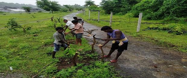 Tree Plantation work at Dahanu
