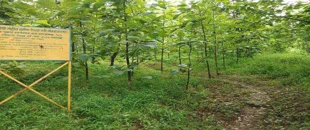 वनीकरण काम, चिखले वाडा