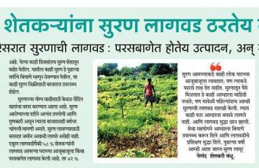 suran Planting