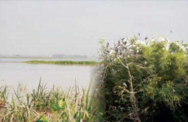 गोगाबिल झील