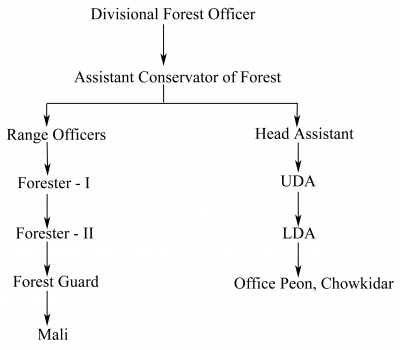 Organization Chart of Forest & Environment