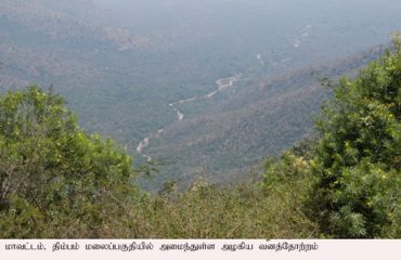 Dhimbam forest long view