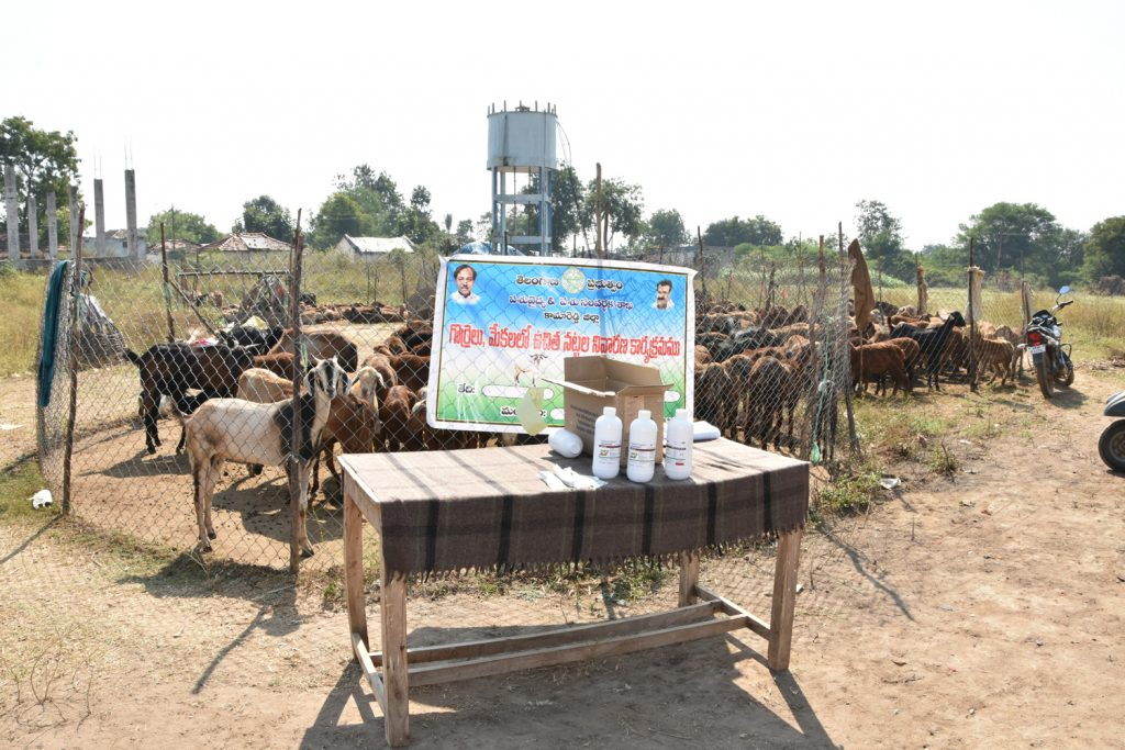 Prevention of snails Program in Sheep and Goats