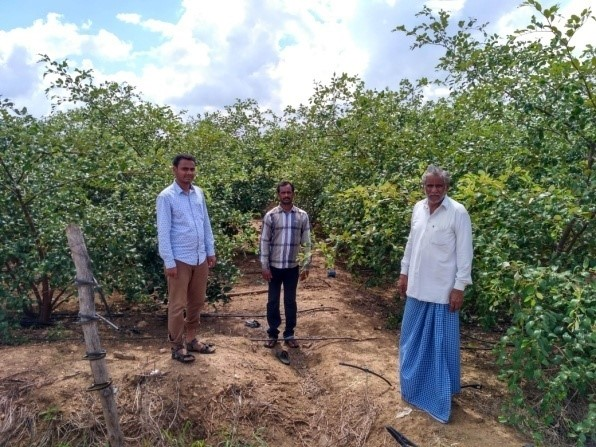 M. Gautam with the Apple Ber orchard.
