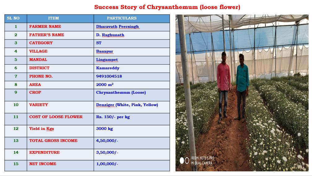 Name Of the Component Chrysanthemum
