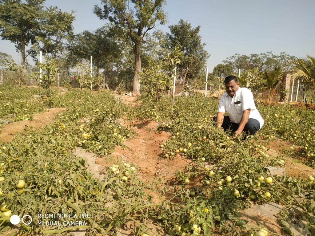 Vegetables KHARIF 2020-21
