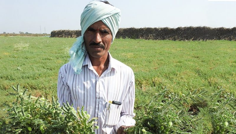 Soybean Production at Kamareddy