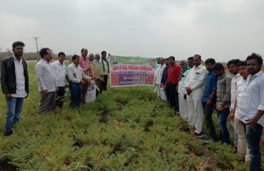 Cotton Production at Kamareddy District