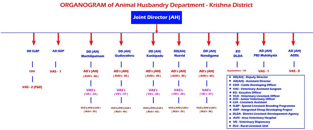 Organogram AH Department