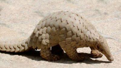 Creature at Takhni Rehmapur Sanctuary