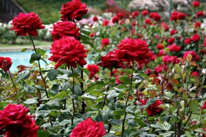 Silk Farm and Rose Garden images