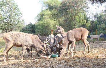kurumbapatti image 7