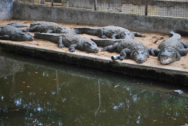 crocodile farm - pond.