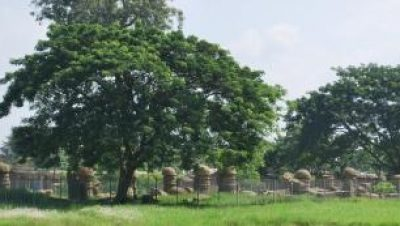 Photo of Mushroom Domed Pillars