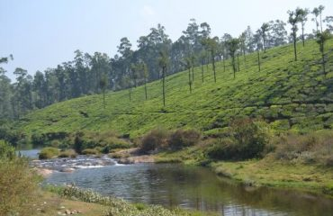 Valparai Estate View