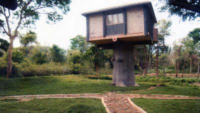 Tree House Kovai Coutralam