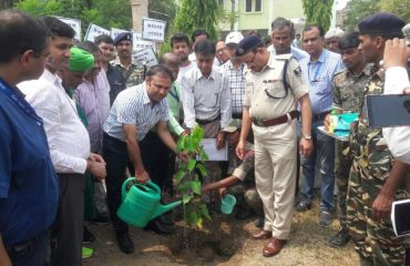 Plantation of tree by Dr. Nawal Kishor Coudhary on 5th June