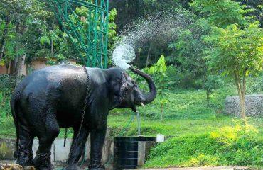 konni Elephant Cage