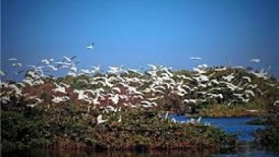 Samaspur Bird Sanctuary
