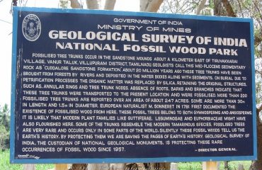 Information About Fossil Wood Park