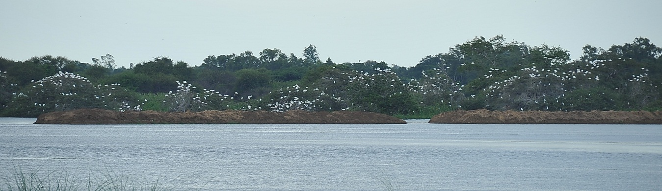 Vaduvoor Bird Sanctuary1