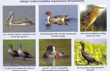 different species of birds1