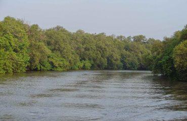 Mangrove Forest1