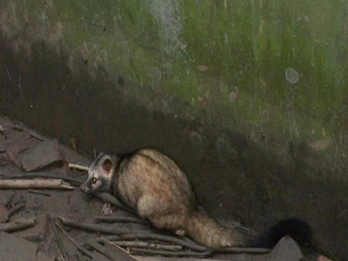 This is the image of Animals in Katarnia ghat