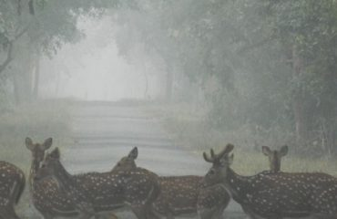 This is the image of Katarnia Ghat wild life image