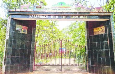Hazaribagh Wildlife Sanctuary