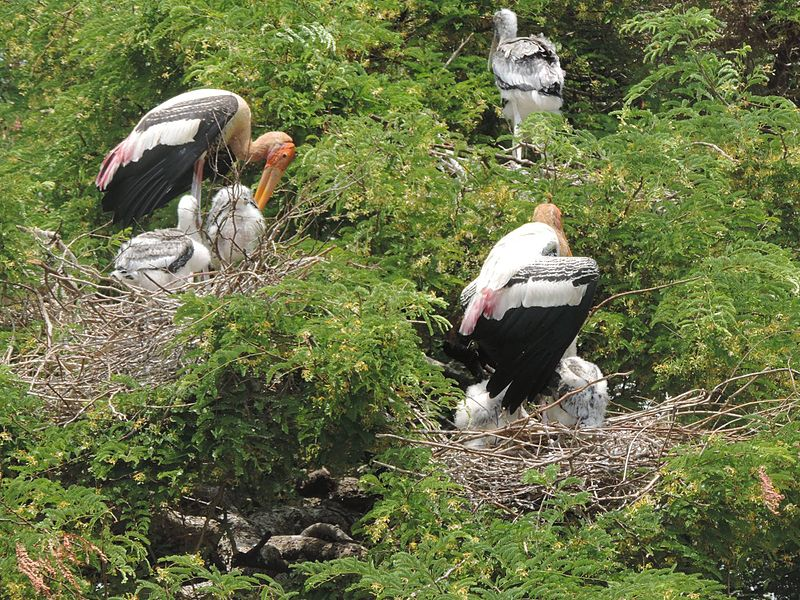 Kaggaladu birds1