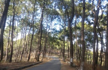 Forest-Road-Hamirpur