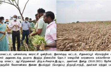 District Collector Inspects the Damaged Crop areas on 20.01.2021
