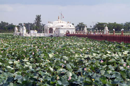 Lotus blooming in the pond adjacent to the temple.